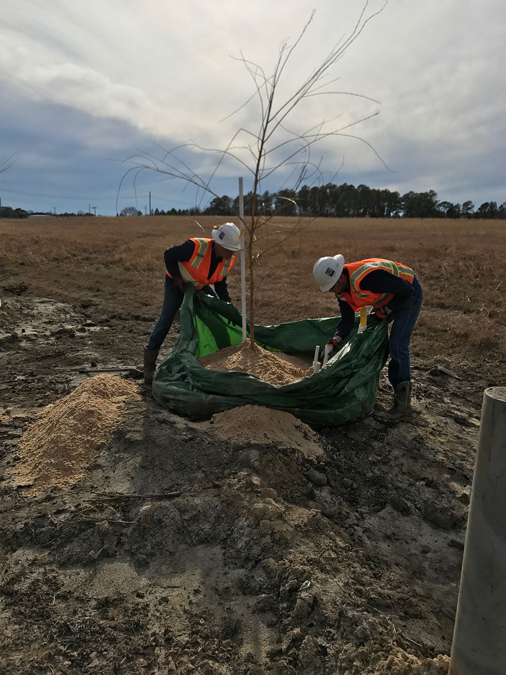 Tree planting for Phytoremediation in MS